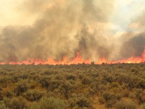 Sage Steppe on fire