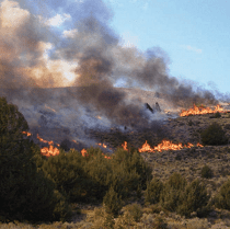Fire in piyon-juniper